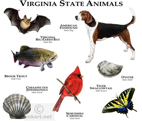virginia state state animals of virginia line and color illustrations