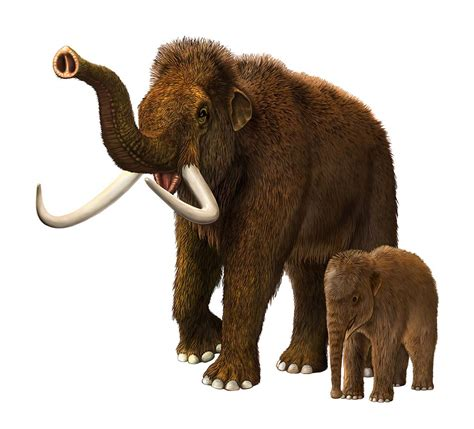 mammoth images tale of the woolly mammoth pitara network