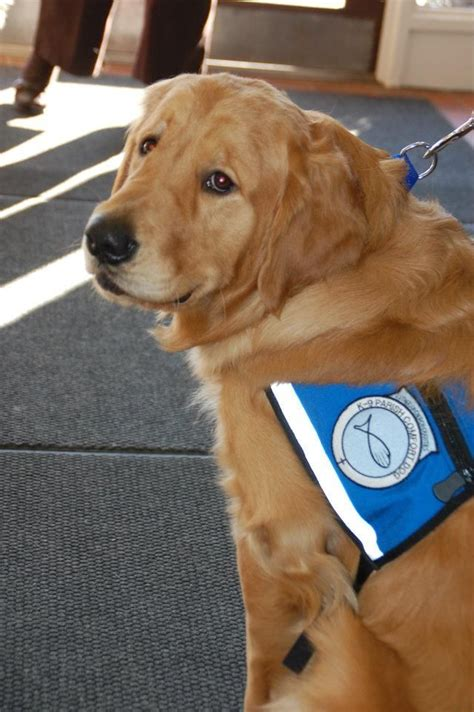 lcc comfort dogs 1000 images about furry friends