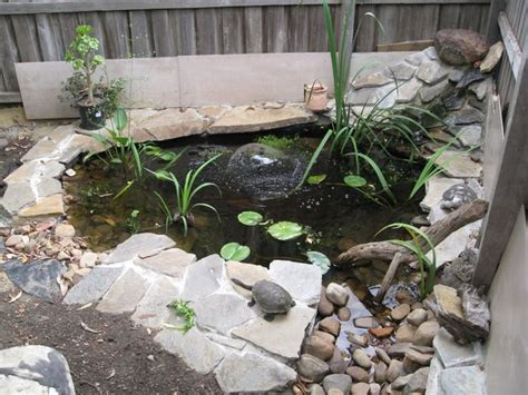 turtle pond nicely done backyard turtle coy pond