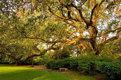 State Gardens by Gardens State Park Florida Usa