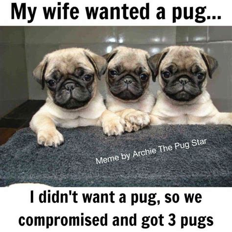 Pug Life Meme - i should ve tried to wheel and deal when we got ours i