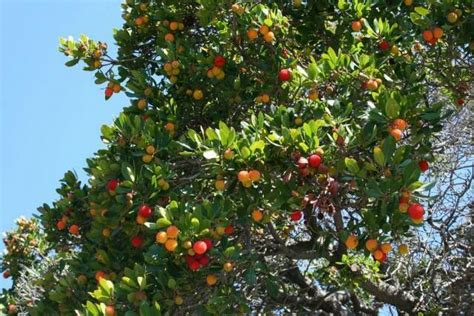 beautiful fruit trees fruit trees a beautiful world