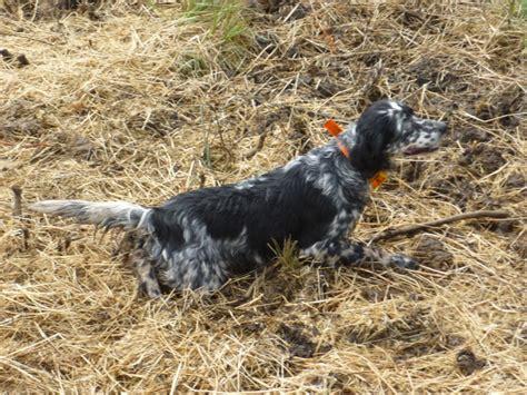 armeria consoli grottaferrata addestramento cani armi nuove e usate ex ordinanza e