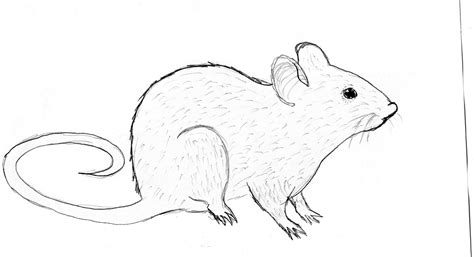 sustainability rat drawing