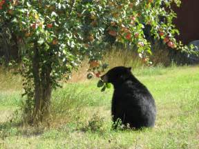 a tree by the fruit it bears proof your fruit trees elk valley aware