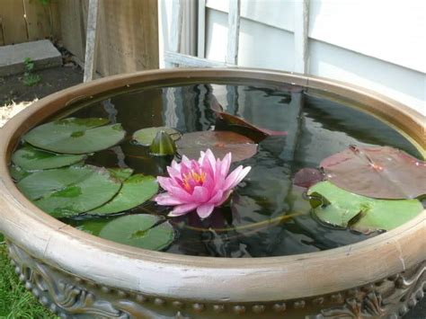 water garden containers for sale 1000 ideas about container water gardens on