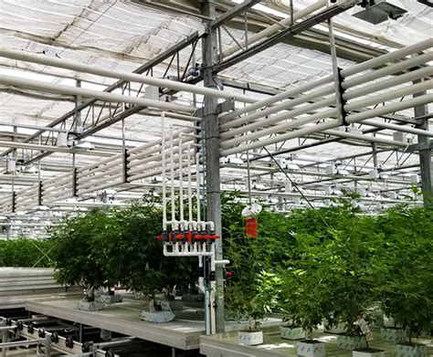 marijuana benches growing tables  commercial cannabis