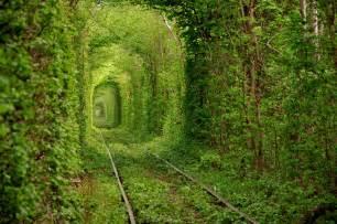 Chandelier Redwood Tree Beautiful Train Tree Tunnel In Ukraine Funny Picture