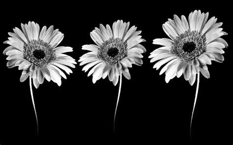 black  white flowers wallpapers hd pixelstalknet