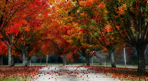 Landscape Pictures Autumn Autumn Landscape Wallpapers Wallpaper Cave Autumn