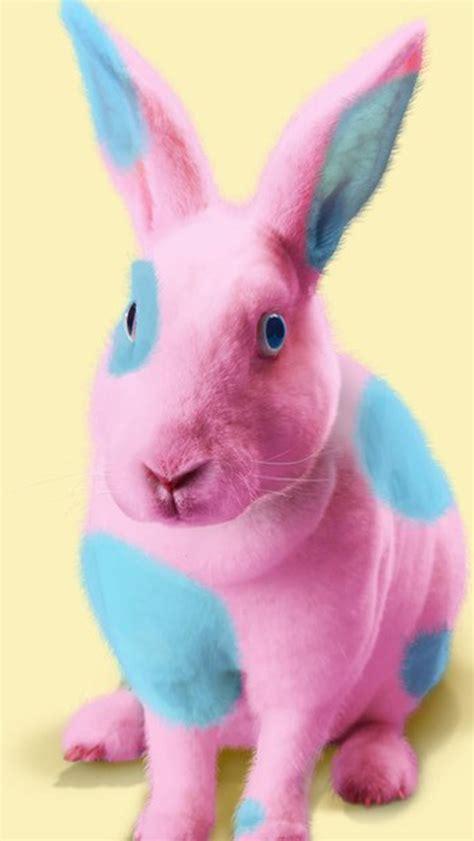 easter wallpaper for iphone 5 cute easter bunny wallpaper wallpapersafari