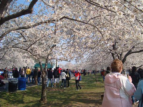cherry blossom festival dc 2013年03月 てんこもり