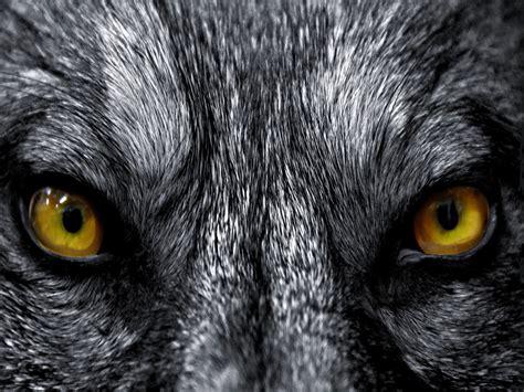 imagenes ojos de animales ojos de animales wallpapers hd taringa