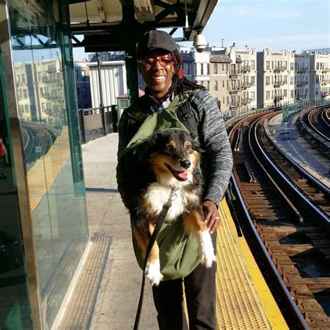 dogs nyc this is what happens when the nyc subway bans dogs unless they fit in bags so bad so