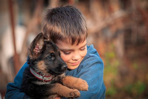 for sale puppies in az puppies for sale puppy stores in and tucson arizona