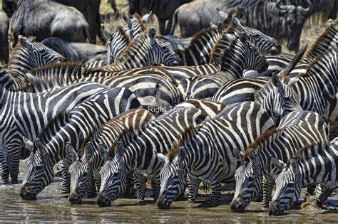tanzania safari tours   amazing fun experience