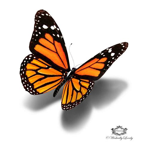 Monarch Design | 5 beautiful monarch butterfly tattoo designs