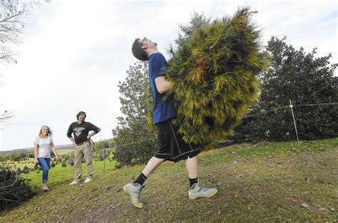 christmas tree farms in carroll county carroll county times