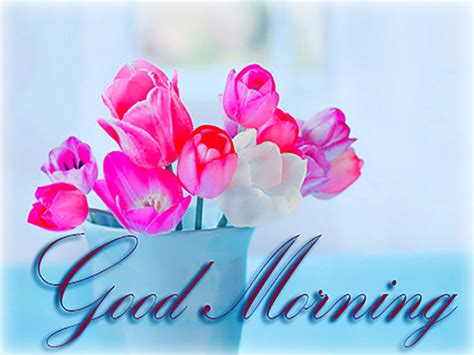 good morning  cards animated pics messages