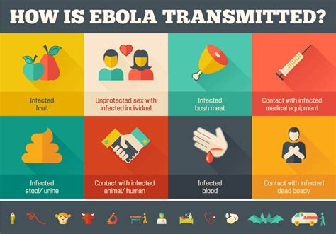 how is infographic design studio how is ebola transmitted