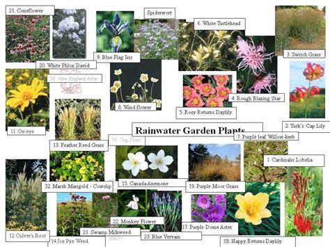 Garden Plants Names And Pictures | garden plants names autouslugi club