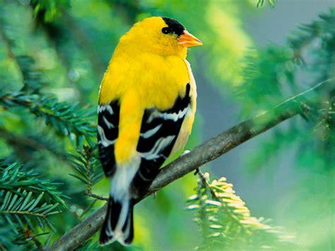 pictures of bird