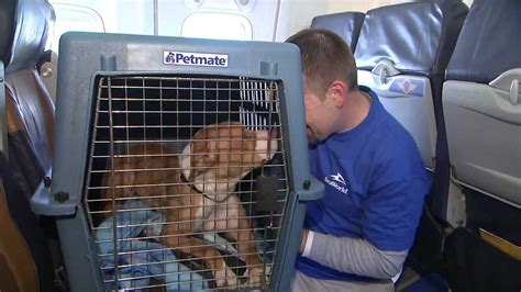 southwest airlines dogs southwest airlines and seaworld rescue 60 dogs and cats stranded by hurricane