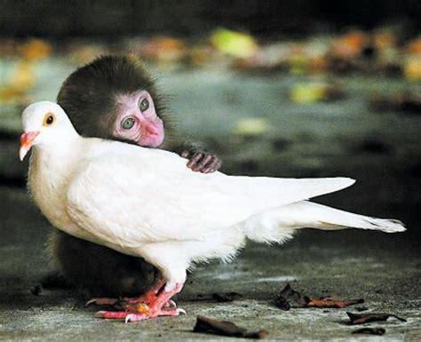pets kingdom dove