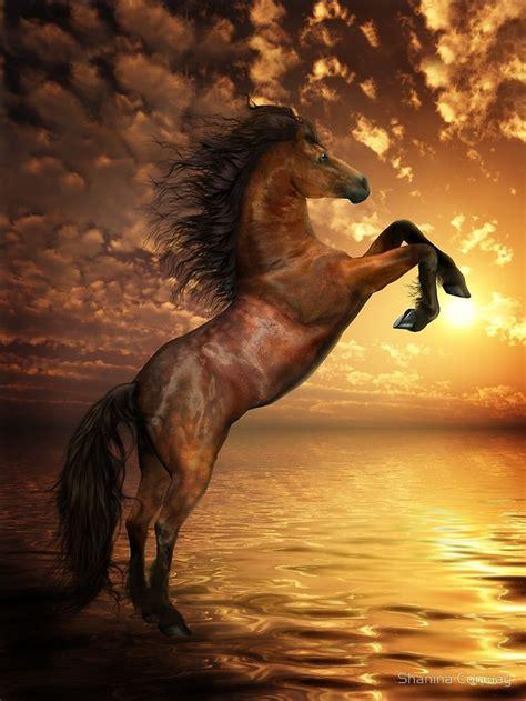 freedom rearing horse artwork  shanina conway