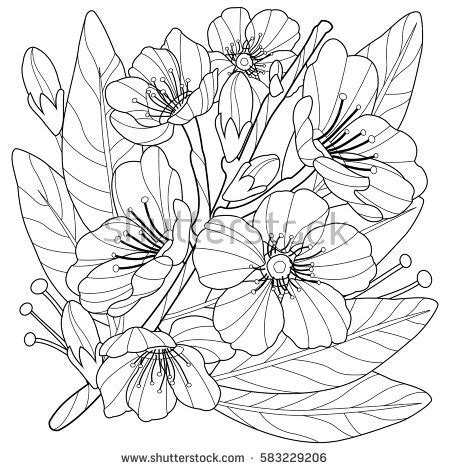 a flower s view coloring book for everyone books blossoming almond tree branch flowers coloring stock