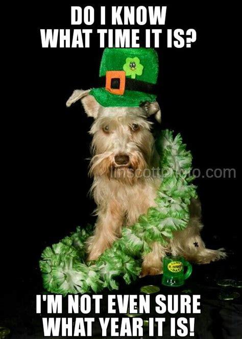 St Patricks Day Funny Memes - st patrick s day mini schnauzer meme starring pompom