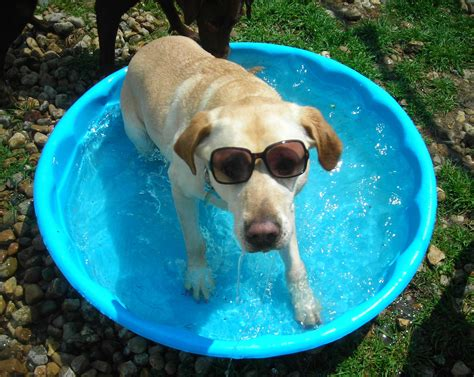 how to keep dog house cool keep pets cool during the dog days of summer best friends pet care the dog dish