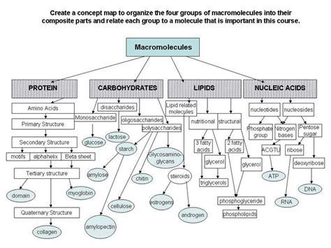protein macromolecule 10 best images about macromolecules on