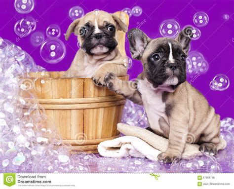 puppy suds puppies and soap suds stock photo image 57951719