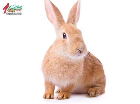 rabbit l avian plusl avian plus