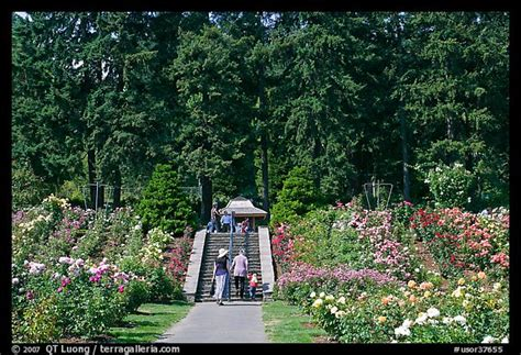 picture photo alley in garden portland oregon usa