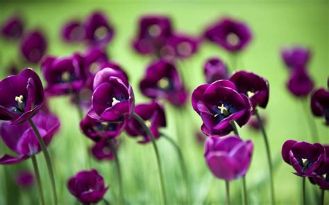 desktop wallpaper purple flowers awesome landscape