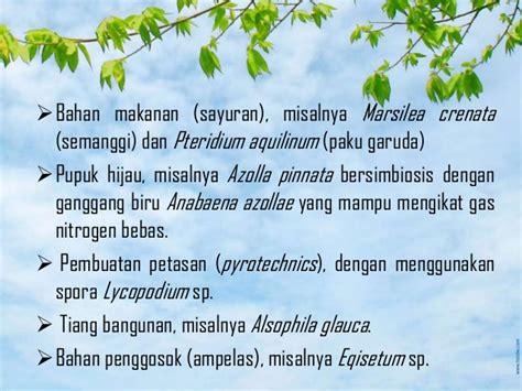 pteridophyta tumbuhan paku