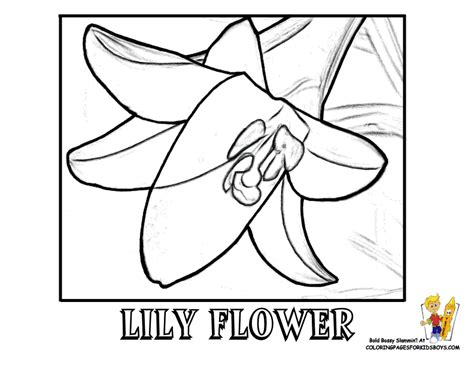 coloring pages of easter lilies luxurious coloring flower picture free flower