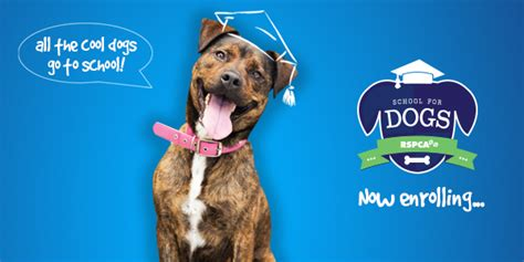 school for dogs rspca queensland puppy and