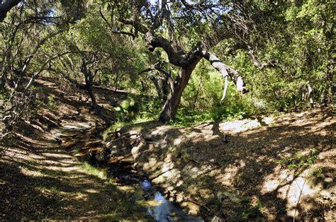 Botanical Gardens Thousand Oaks Small Creek Free Stock Photo Domain Pictures