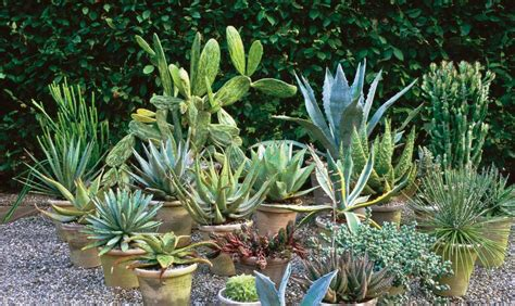 Tropical Garden Plants by The Placements Of Your Tropical Garden Plants Margarite