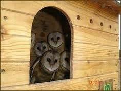 owl homes owl house on