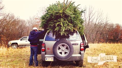 christmas tree farms in indiana littleindiana com