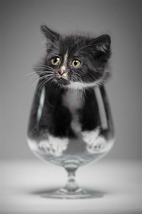 Cat Sitting At Table Meme - cat in glass animals pinterest