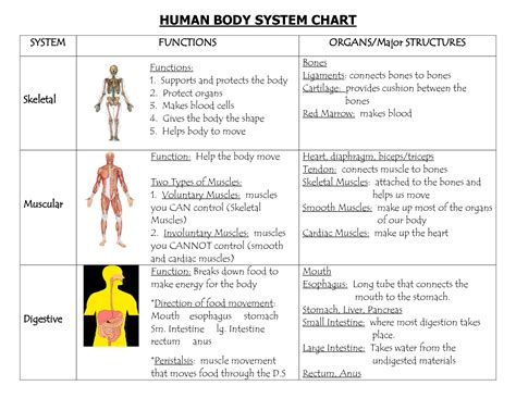 Section 35 1 Human Systems by Functions Of Human Systems Www Okaidimalta