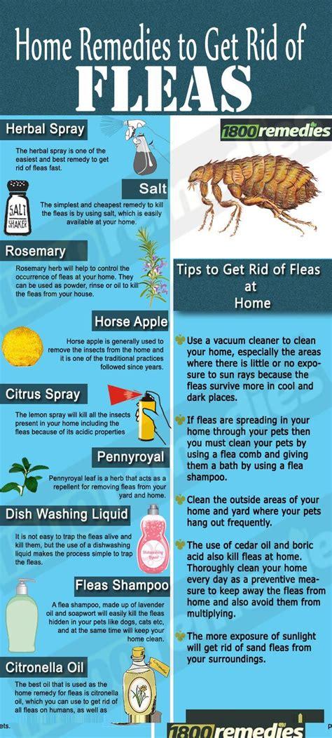 mayflies wwwe bedbugscom  rid  bedbugs today