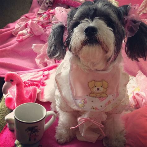 Pin By Kristi Bulluck On Quot Pretty In Pink Quot Puppy All Dressed Up Pink Puppies