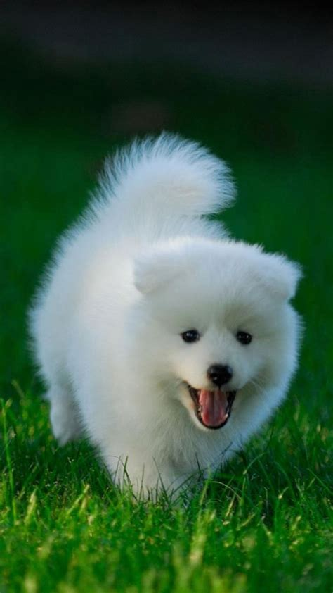 iphone wallpapers hd with dogs dog pictures for iphone cute white dog galaxy note 4 wallpapers